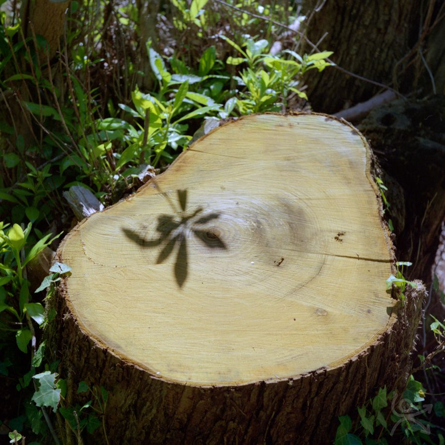 La branche amputée