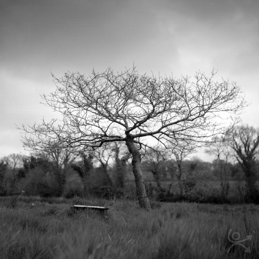 L'arbre envoutant