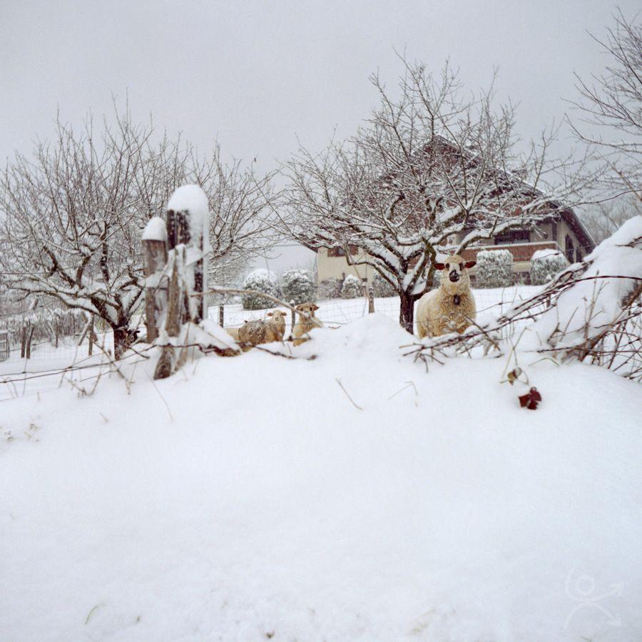 Rencontre hivernale
