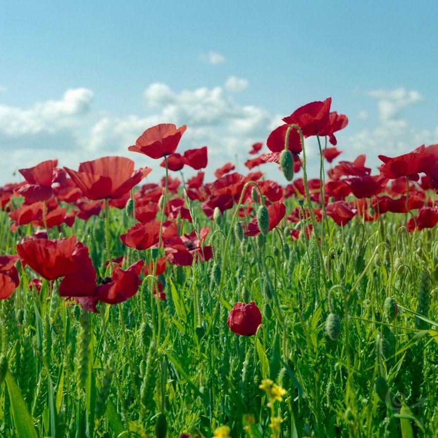 Mots d'A, graines de belles fleurs sauvages