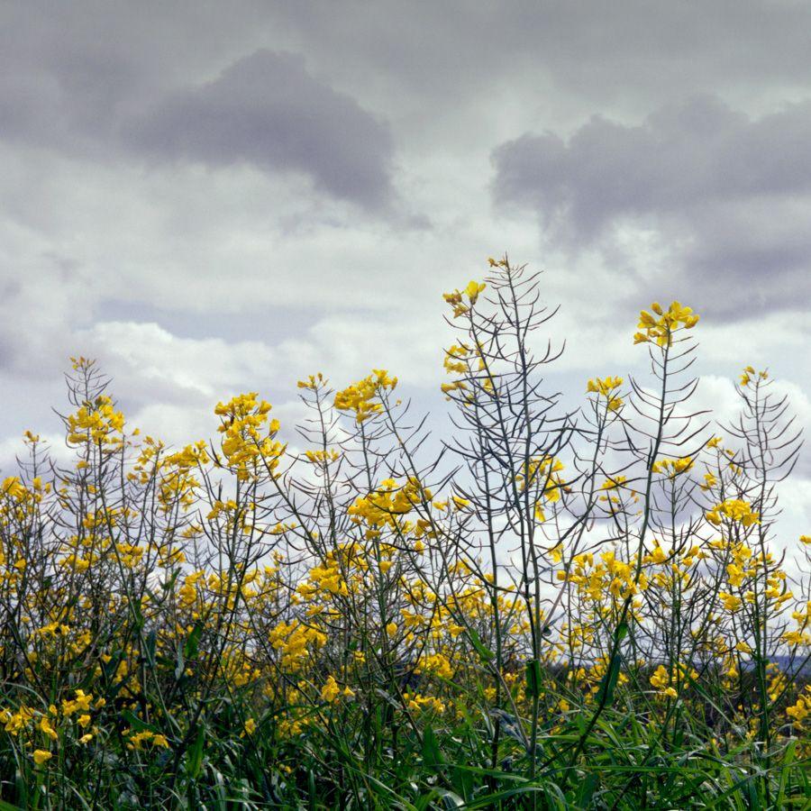 Biocarburant, biodésastre