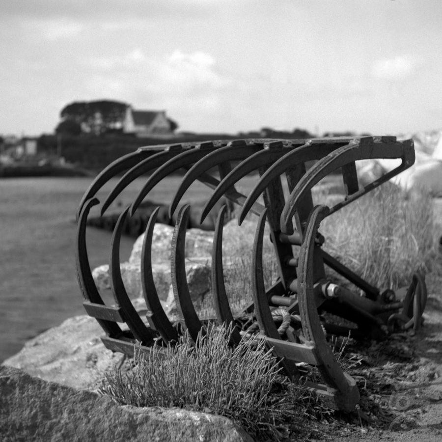 Les mâchoires de la mer