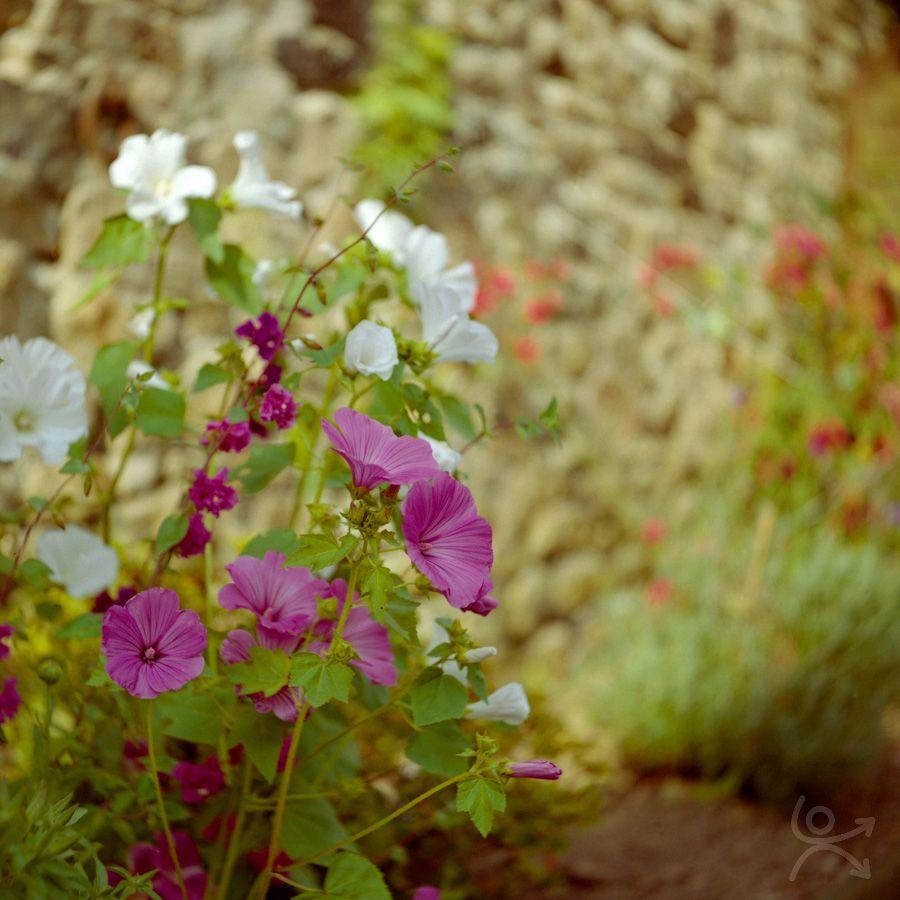 Fleurs du vertige